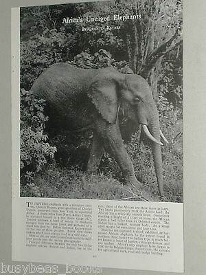 1951 magazine photo-article Wild ELEPHANTS in Africa, Kenya