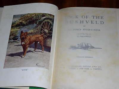 "Rare Staffordshire Bull Terrier Dog Book ""jock Of The Bushveld"" 1931 474 Pages"