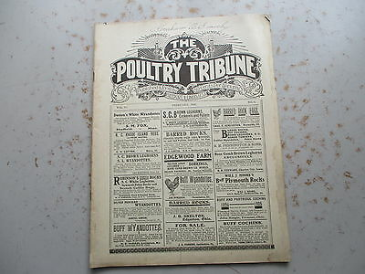 Poultry Tribune Magazine - February 1906 Issue