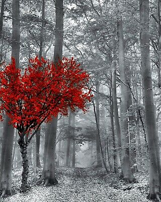 Black White Red Wall Art, Red Tree, Forest Path, Pop Of Red Wall Art Picture