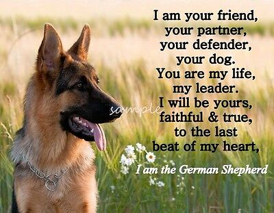 "GERMAN SHEPHERD Dog LOYALTY Refrigerator Magnet 2  3.75"" x 3"""