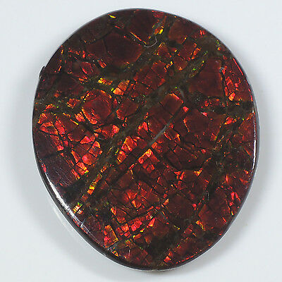 13.16 ct Fancy Cabochon Iridescent Ammolite Gemstone from Canada - Loose Gemston