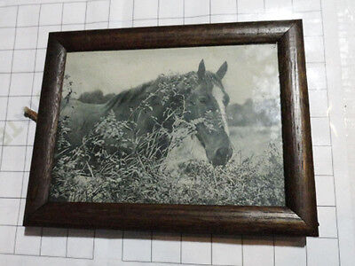 "vintage antique pro ~9x7"" FRAMED HORSE PHOTO b/w picture photograph solid wood"