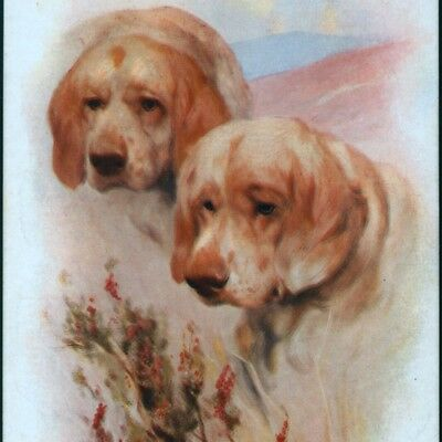 Clumber Spaniel Dogs With Heather,chromolithograph,arthur Wardle Old Postcard