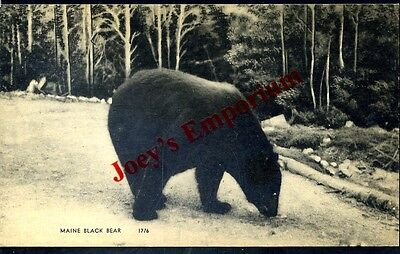 Maine, Black Bear, Unused, (202