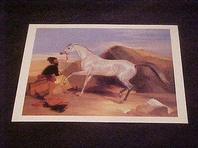 Arab Stallion by Sir Edwin Landseer Arabian Horse & Arab Owner Laminted Postcard