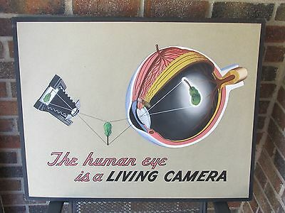 1939 Original Art Optometrist Optometry Chart By Claude Hansen Human Eye Eyeball