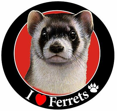 Ferret Car Magnet