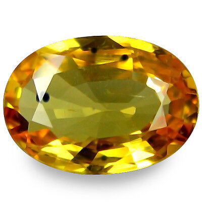 1.520Cts  Prosperous Stunning Luster Yellow Natural Sapphire Oval Gemstones