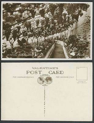 Jersey Old Real Photo Postcard St. Peters Vineries, Grape Vines Grapes Fruits CI