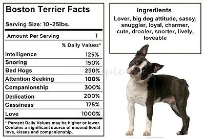 BOSTON TERRIER Facts LARGE FRIDGE MAGNET