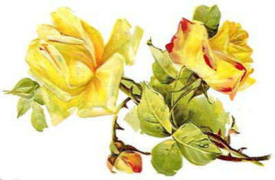 BiG FaT YeLLoW CaBbaGe RoSeS ShaBby WaTerSLiDe DeCALs TRaNsFeRs