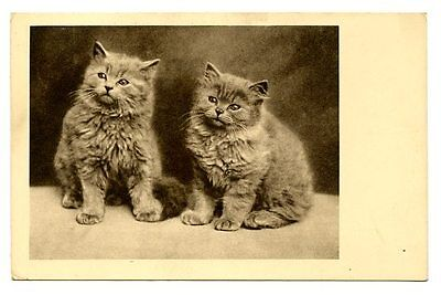 vintage cat postcard pair sweet fluffy cats kittens 1939