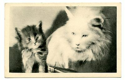 vintage cat postcard adorable pouting mum cat & kitten