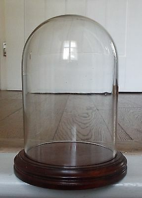 Vintage Glass Display Dome Cloche & Stand Taxidermy