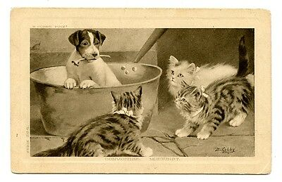 vintage cat postcard Cobbe curious cats watch terrrier dog w bone in tub 1912