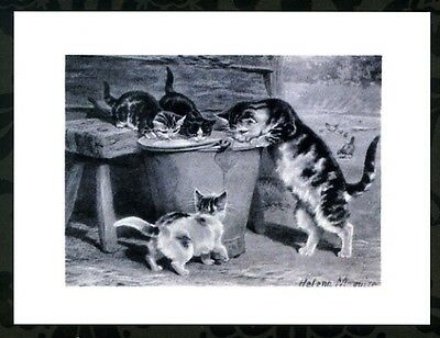 modern cat postcard Maguire tabby cats family mum kittens drink big bucket milk