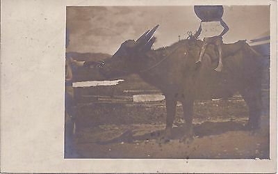 Philippines 1905 photographic Buffalo card used to Switzerland