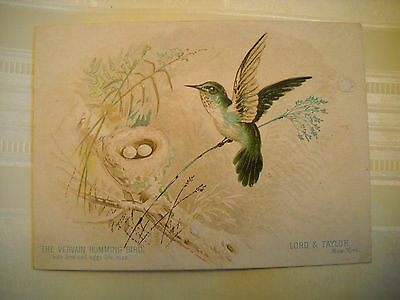 LORD & TAYLOR Victorian TRADE CARD CHROMOLITHOGRAPH humming bird with nest NY