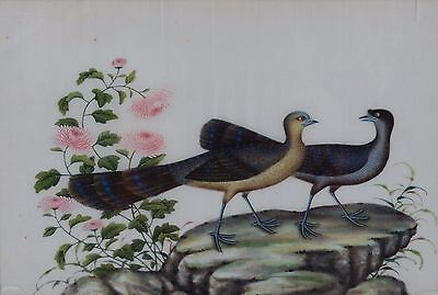 Fine Antique Chinese Rice Pith Paper Painting Two Peacocks