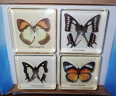 4 Butterfly Set Yellow Orange Tip, Common Nawab, China Nawab & Leopard Lacewing