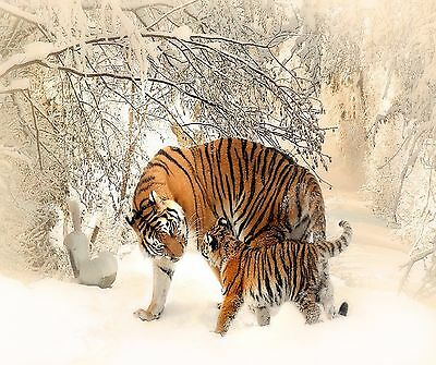MOTHER TIGER AND BABY IN SNOW COMPUTER MOUSE PAD 9 x 7