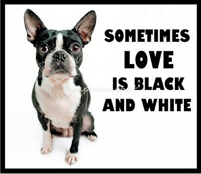 "BOSTON TERRIER Black and White 3.75"" x 3.25""  Fridge Magnet"