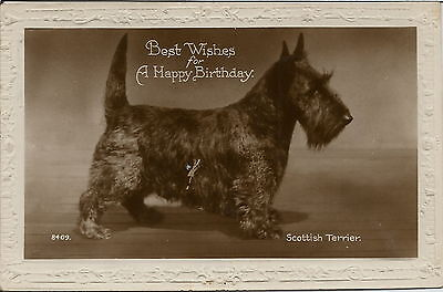 Scottish Terrier Real Photographic Dog Postcard