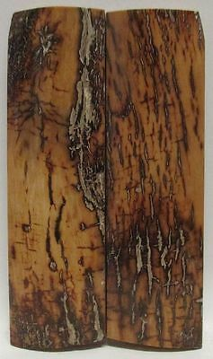 Fossil Bark Knife Scales 3-5/8 X 1-1/16 X 1/4