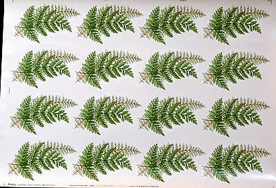 Ceramic Decals  Ferns 646216 Matthey 16 On A Sheet W/d No 162141 Right Price
