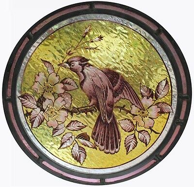 Stunning Rare Antique English Painted Bird In Blossom Stained Glass Roundel