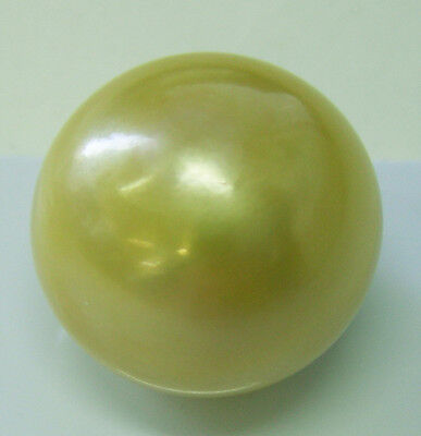 18.3mm! HUGE AUSTRALIAN GOLD SOUTH SEA PEARL UNDRILLED 100% UNTREATED +CERT