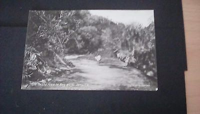 West Indies,Jamaica,early postcard,On the road to Bog Walk.