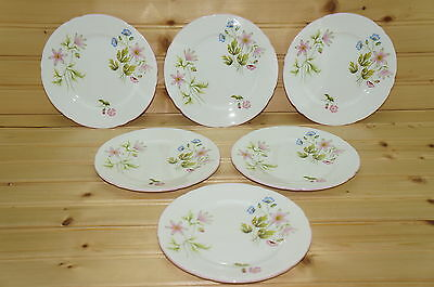 Shelley Field Flowers 13955 Set of (6) Dessert or Bread & Butter Plates, 6""