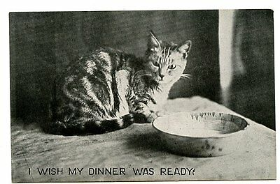 """vintage cat postcard adorable tabby empty bowl """"I Wish My Dinner Was Ready"""""""