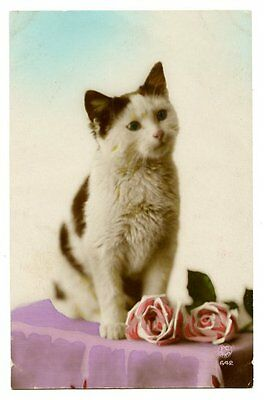 vintage cat postcard hand tinted real photo cat kitten w pink roses