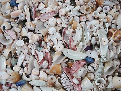 Shell Beads 50g Asst Shapes/Colours Jewellery Jewelry Drilled FREE POSTAGE