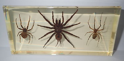 3 Spider Collection Set Tarantula & Ghost  & Wasp Spider in Amber Clear Block