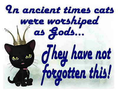 Custom Made T Shirt Ancient Times Cats Worshiped As Gods Have Not Forgot Choice