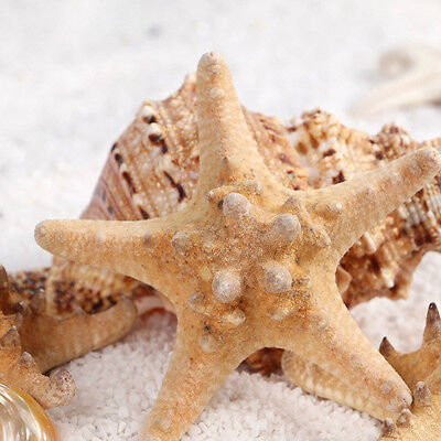 2/10X Starfish Natural 4cm Embellishments Shells Craft Beach Weddings Decor DIY