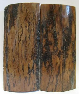 Fossil Bark Knife Scales  3-1/8 X 1-3/8  X 1/4
