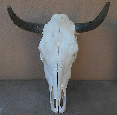 "18"" STEER SKULL HORN LONGHORN cow bull taxidermy head"