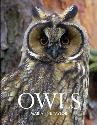 Owls (Hardcover), Taylor, Marianne, 9781408155530