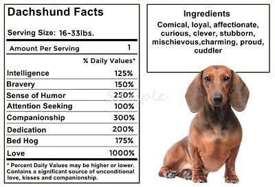 DACHSHUND Facts LARGE FRIDGE MAGNET