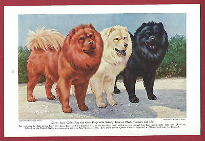1943 Dog Print Illustration ~ CHOW in three colors ~ Art by Walter Weber