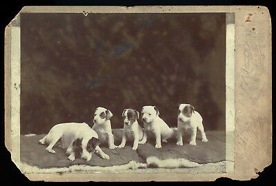 LITTER OF 4 PUPPY DOGS & MOTHER DOG 1880s CABINET PHOTO ALBERT LEA MINNESOTA