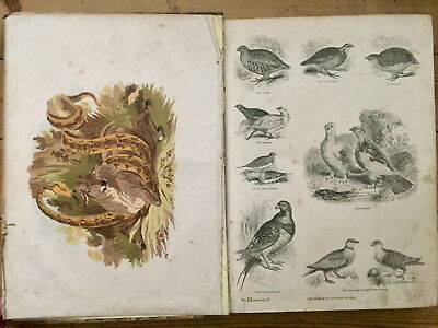 1856-The Pictorial Museum of Animated Nature-Vol 2-Hundreds of Illustrations