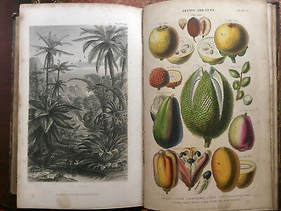 1855 - A History of The Vegetable Kingdom & Physiology of Plants - Colour Plates