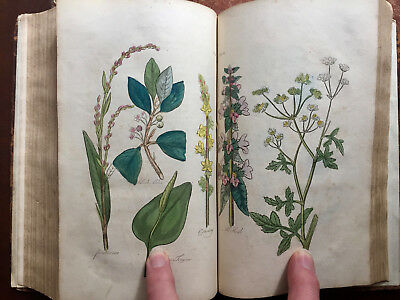 The Family Herbal by Sir John Hill - 54 Hand Coloured Plates