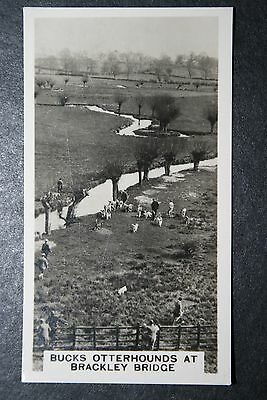 Otter  Hunting    Vintage 1930's Action Photo Card  VGC